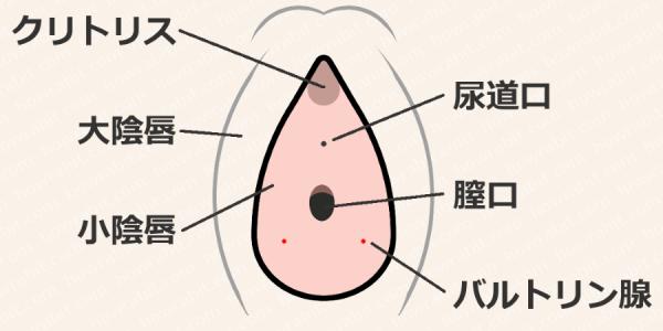 バルトリン腺の図解